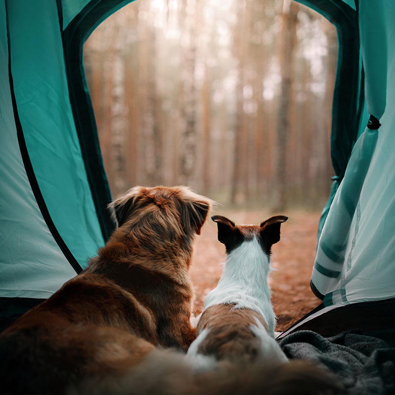 great-tips-for-taking-your-dog-camping