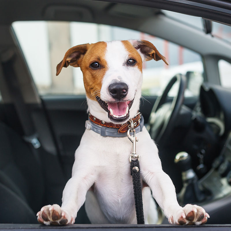 best-travel-tips-for-road-trips-with-your-pup