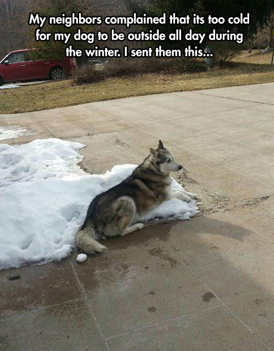 39 woof 39 it 39 s winter how to snow proof your dog with the perfect coat baxterboo - Keeping outdoor dog happy winter ...
