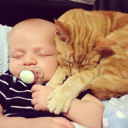 خوابیدن گربه و بچه