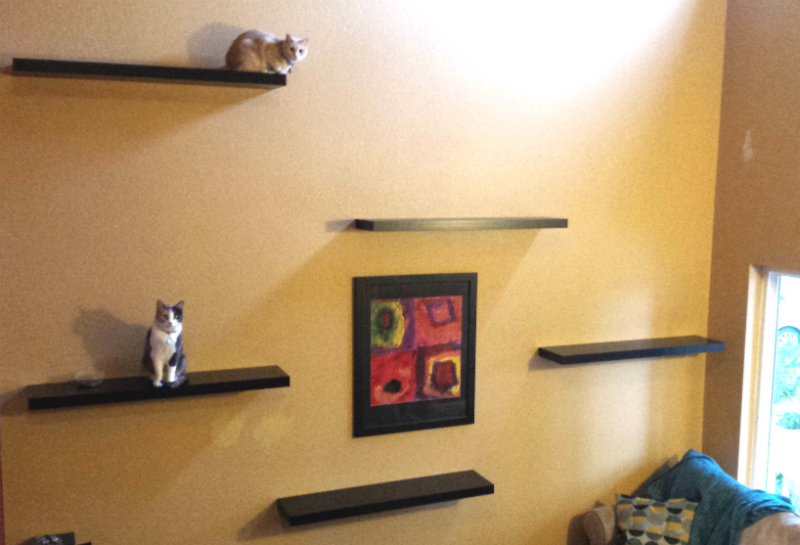 Helping Cats Get Use To A New Home