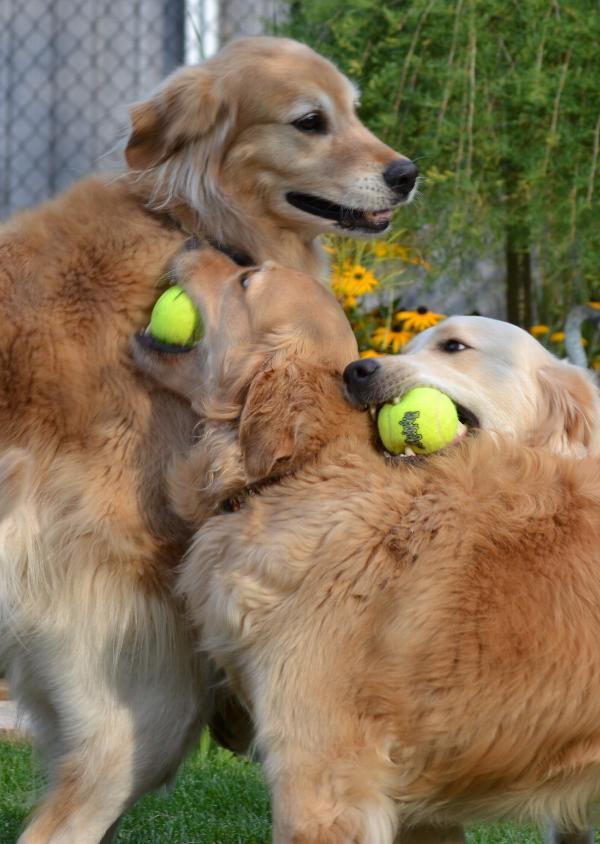 Air Kong 3 Tennis Balls with Squeaker