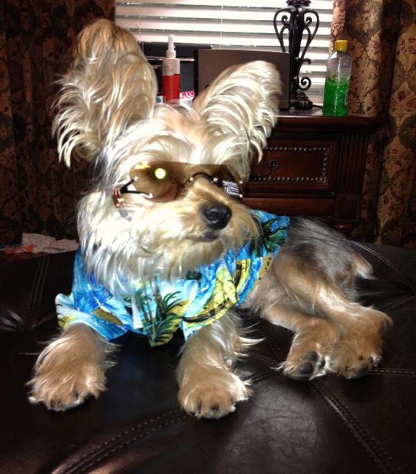 Aloha Camp Shirt by Casual Canine - Blue
