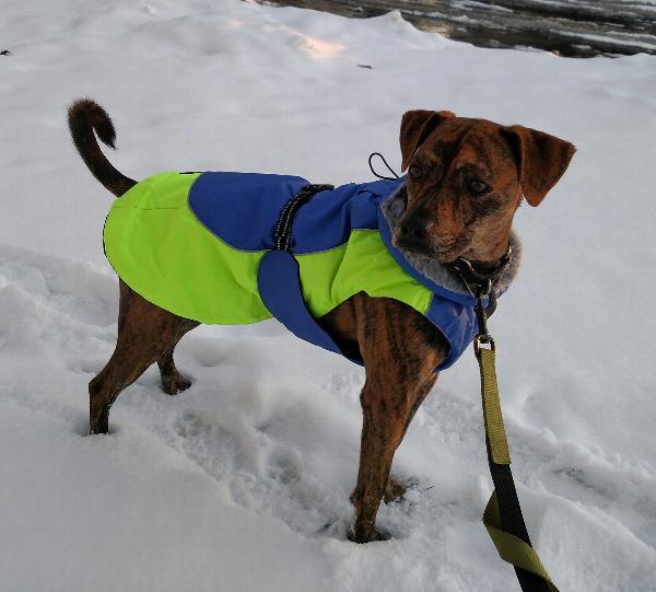 Fido Dog Rescue Ann Arbor Mi