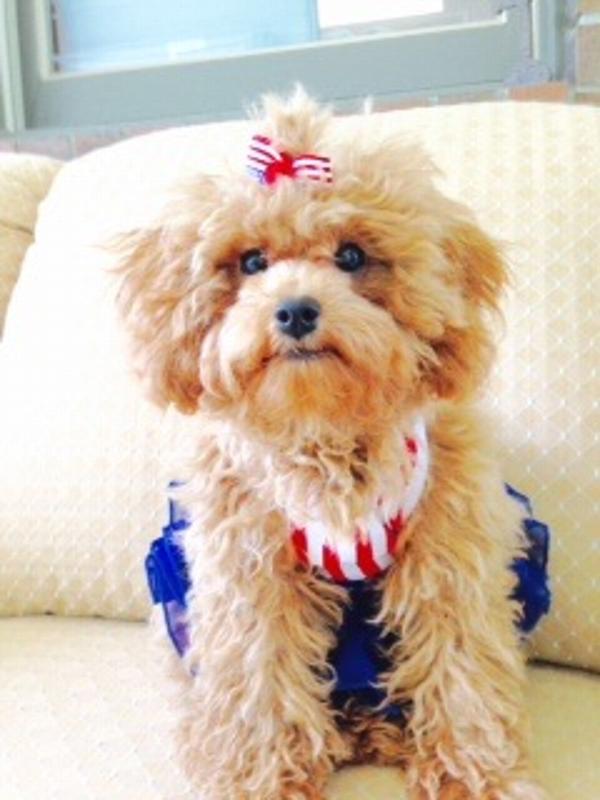 American Girl Dog Dress by Dogo