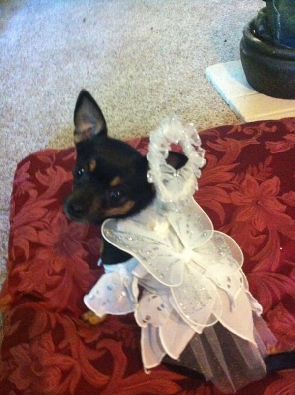 Angel Paws Halloween Dog Costume Baxterboo
