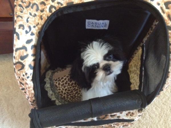 Animal Print Backpack Dog Carrier On Wheels Cheetah