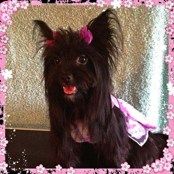 Aria Sunday Rose Dog Bows