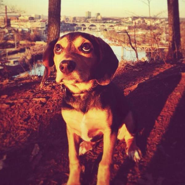Barking Basics Dog Collar - Black
