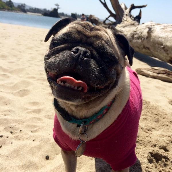 Basic Dog Hoodie - Raspberry Sorbet