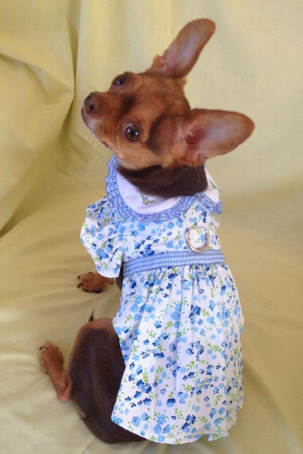 Blue Belle Floral Dog Dress By Doggie Design Baxterboo