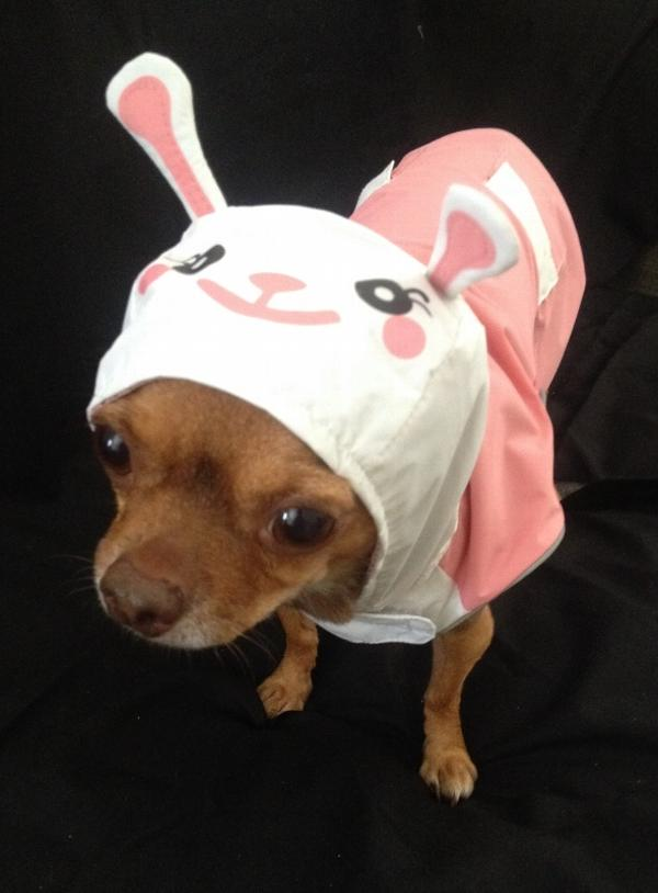 Bunny Dog Raincoat by Dogo