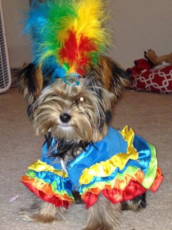Polly Parrot Halloween Dog Costume Baxterboo