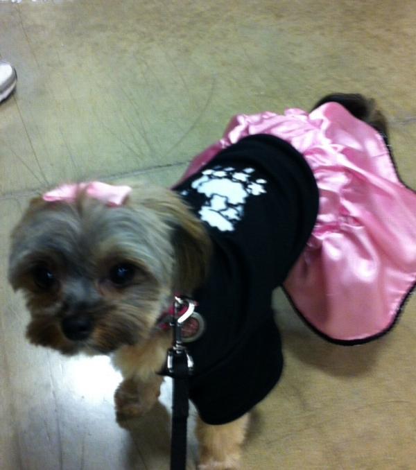 Casual Canine Poodle Skirt Dog Set Baxterboo