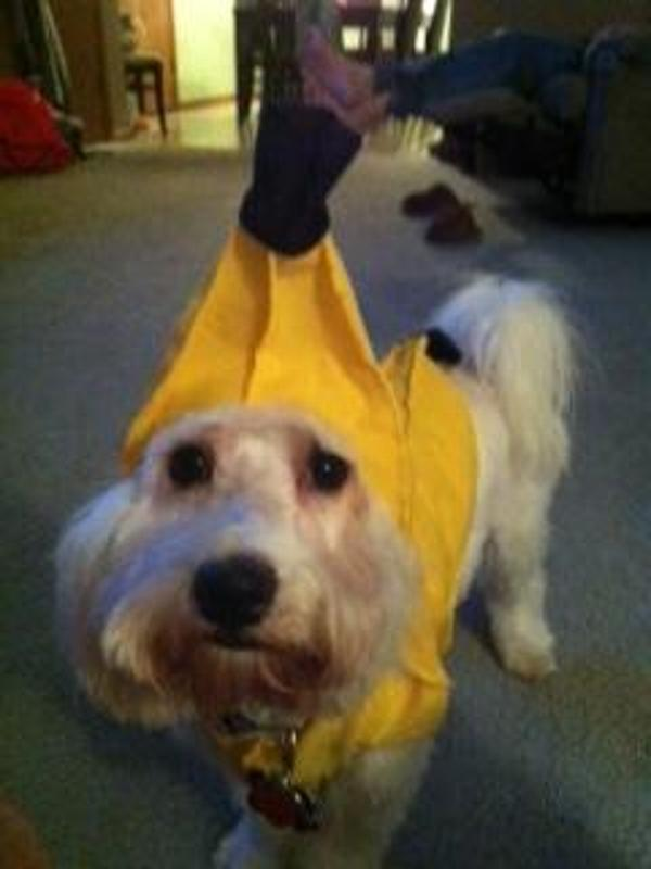 Chiquita Banana Dog Costume By Rasta Imposta Baxterboo
