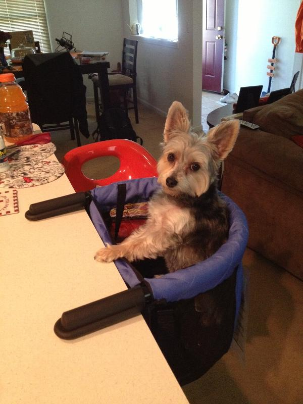 Clip On Dog High Chair Periwinkle Baxterboo