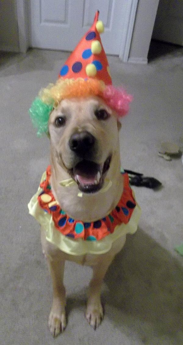 Clown Collar and Hat Dog Halloween Costume