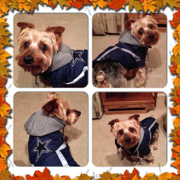 Dallas Cowboys Dog Puffer Vest