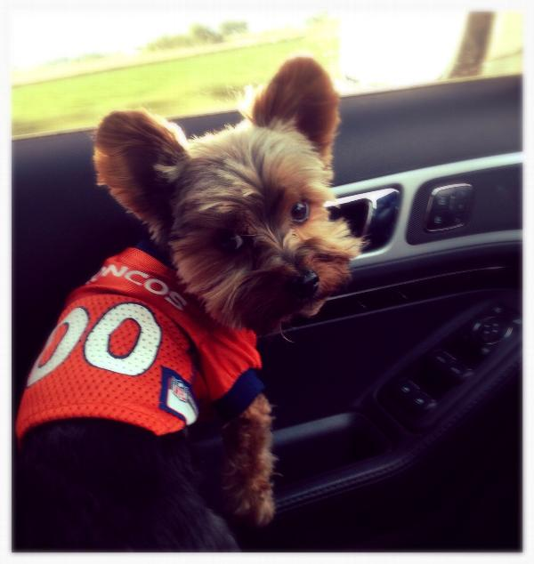 Denver Broncos Officially Licensed Dog Jersey - Orange