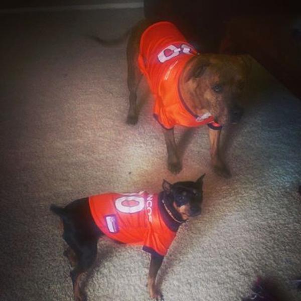 Orange Denver Broncos Jersey XX-Large | Poudre Pet and ...
