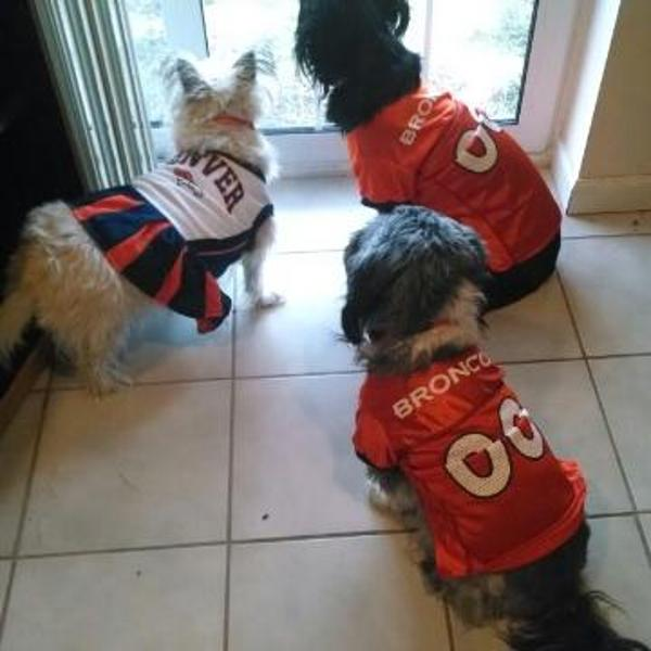 Predominantly Orange - A Denver Broncos Fan Site - News ...