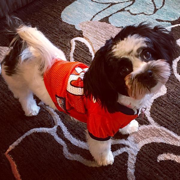 Official Denver Broncos Jerseys, Broncos Jersey, Uniforms ...