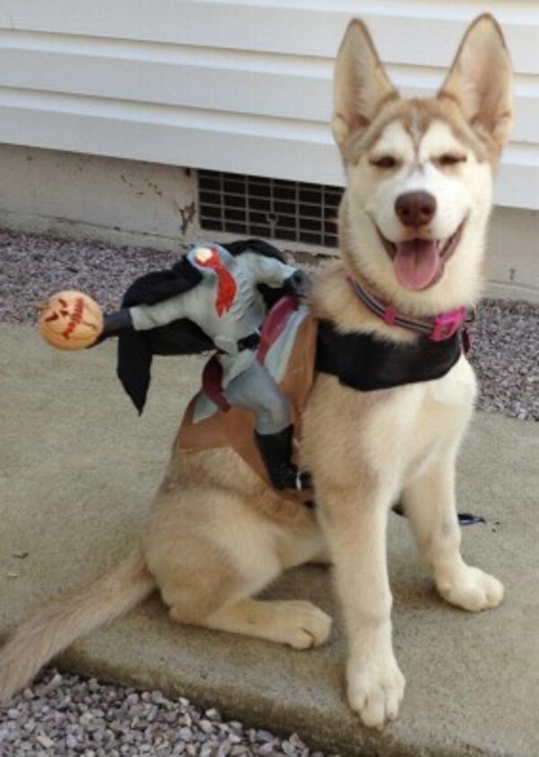 Dog Riders Harness Halloween Costume - Headless Horseman