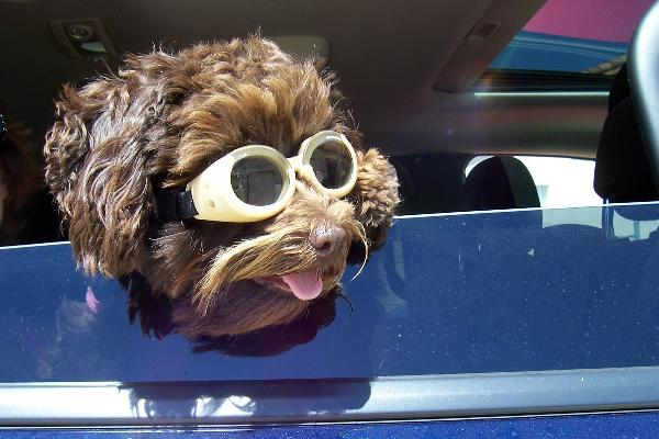 Doggles - Chrome Frame with Smoke Lens