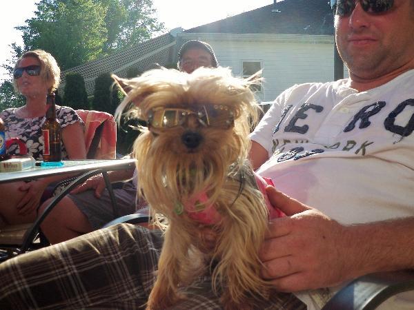 doggles k9 optix sunglasses for dogs copper paw lens