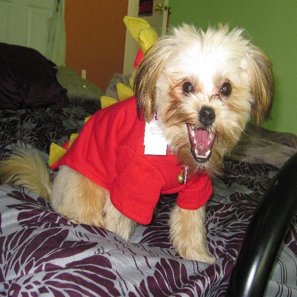 Dragon Dog Sweatshirt By Dogo Baxterboo