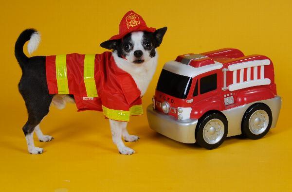Fireman Dog Halloween Costume Baxterboo