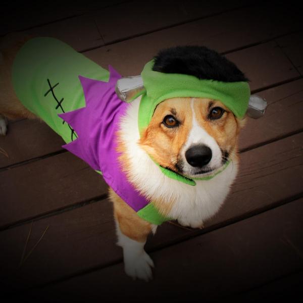 Frankenstein Hat and Dog Shirt by Dogo