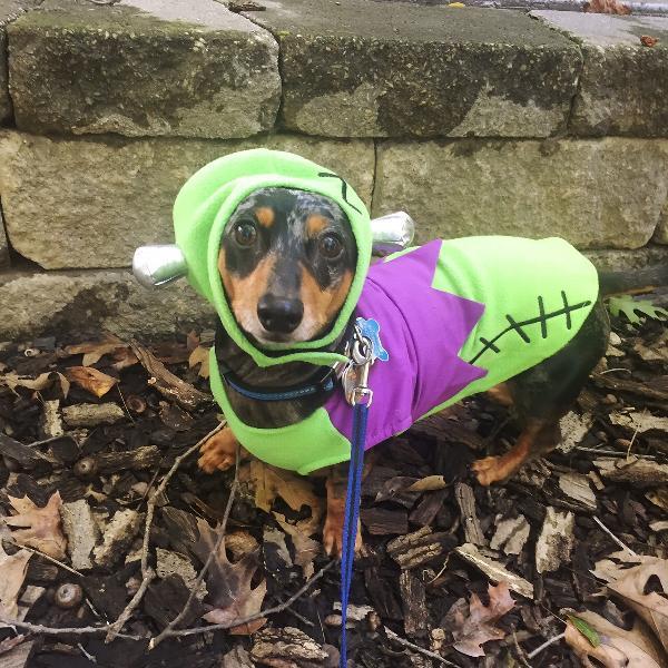 Frankenstein Hat And Dog Shirt By Dogo Baxterboo
