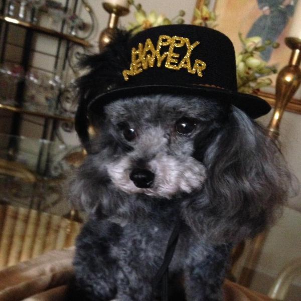 Happy New Year Dog Hat Black Baxterboo