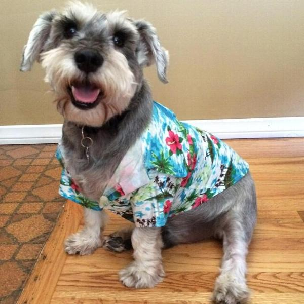 Hawaii Fever Dog Shirt by Dogo - Light Blue