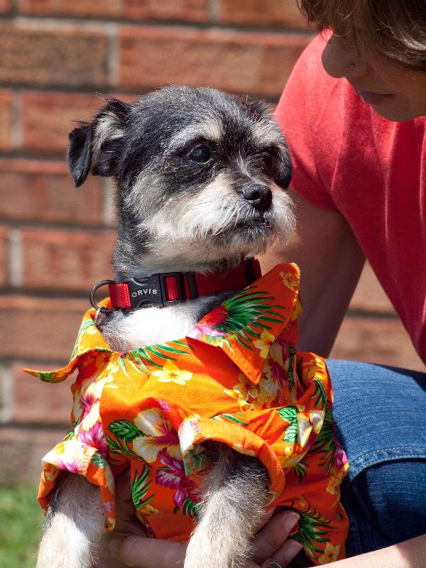 Hawaiian Print Dog Shirt - Orange