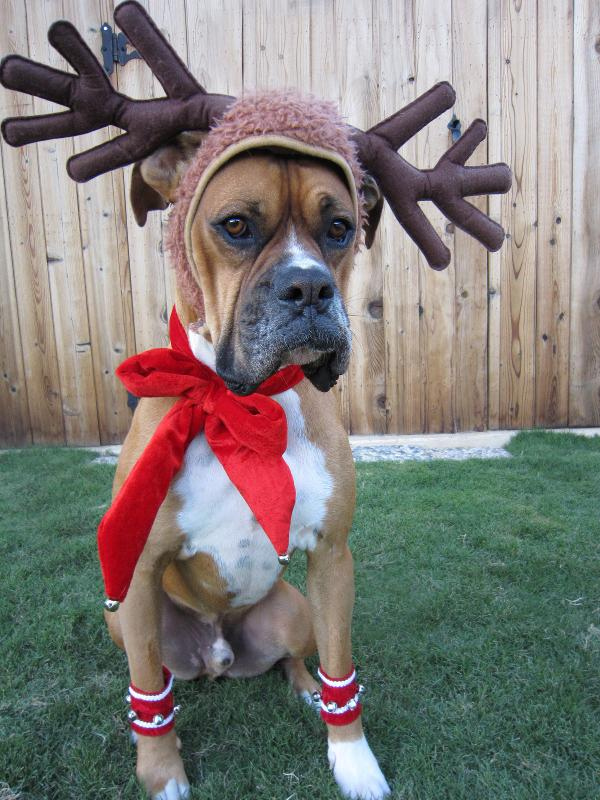 Holiday Reindeer Dog Costume With Leg Cuffs Red Amp White