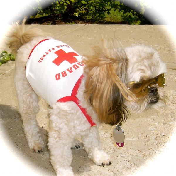 Lifeguard Dog Tank Shirt Baxterboo