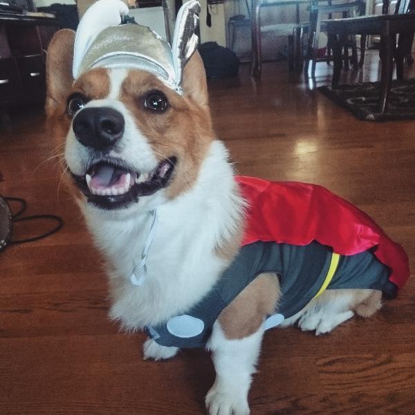 Marvel Thor Dog Costume Baxterboo