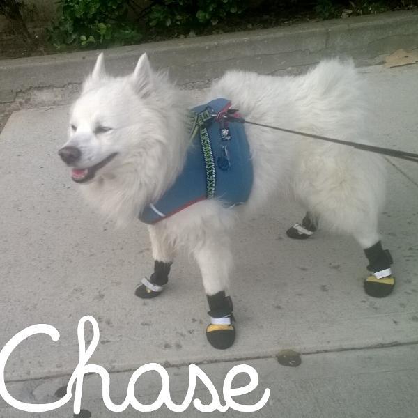Muttluk Dog Boots Reviews