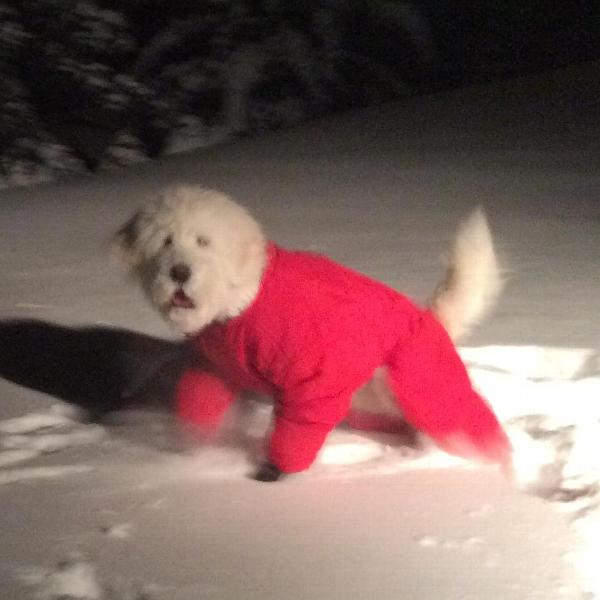 Macy in steady brook nl canada muttluks boots and snow suit perfect