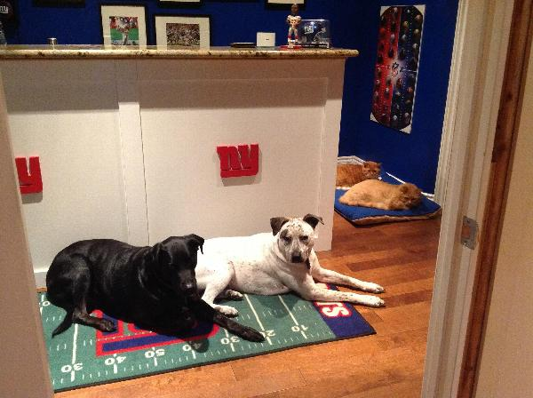 New York Giants Dog Bed Baxterboo