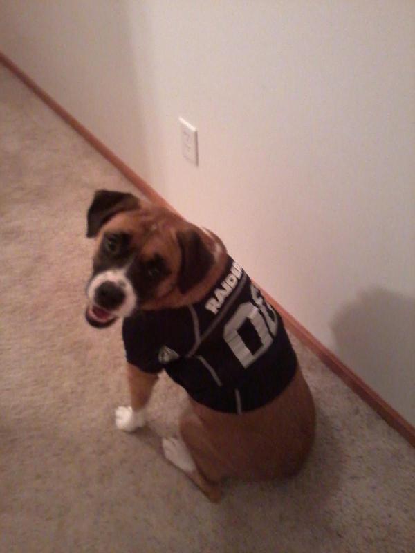 Oakland Raiders Dog Jersey Baxterboo