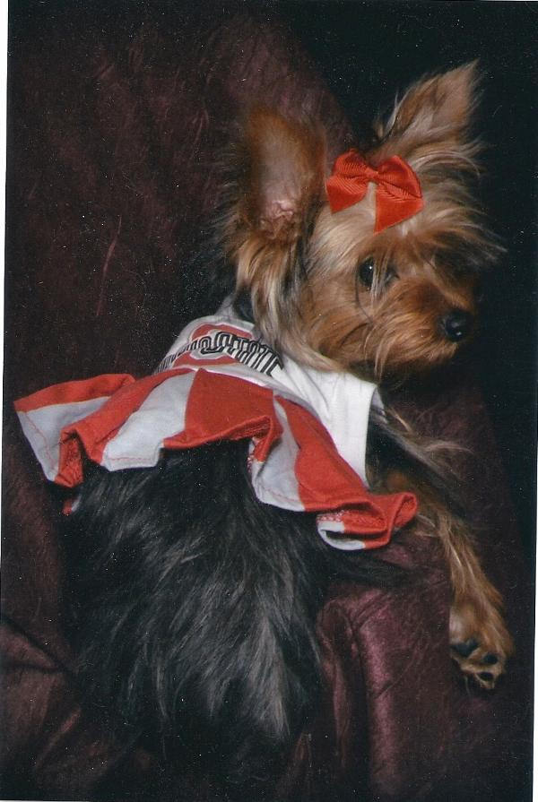 Ohio State Buckeyes Cheerleader Dog Dress Baxterboo