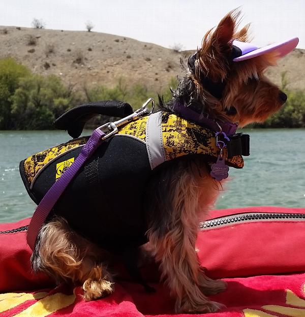 Pet Life Jacket by Body Glove - Yellow