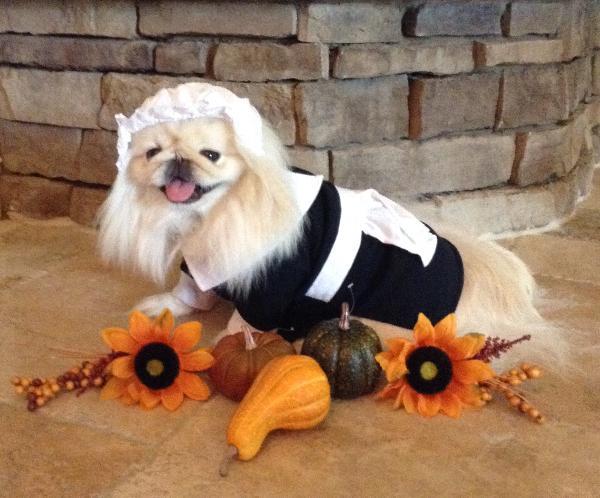Pilgrim Girl Dog Costume