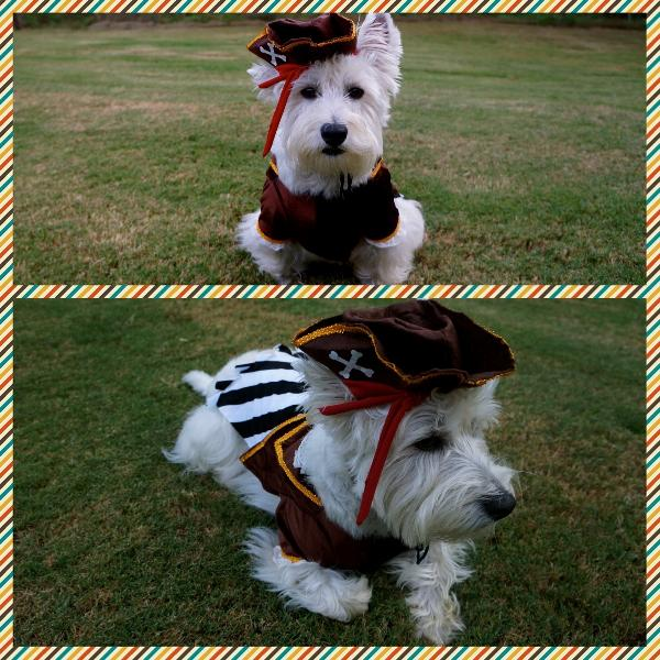 Pirate Captain Halloween Dog Costume