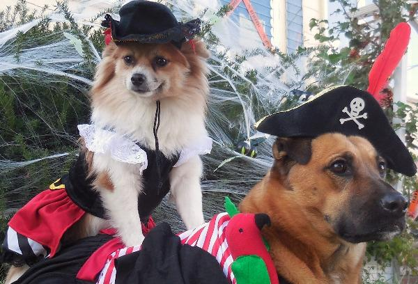 Pirate Tails Halloween Dog Costume