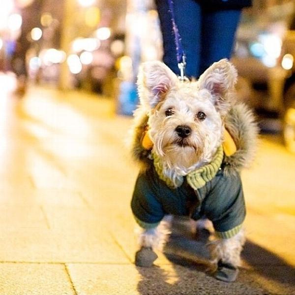 Pocket Dog Parka by Dogo - Green