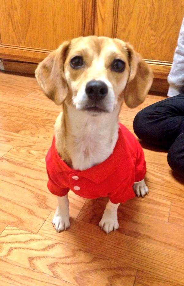 Polo Dog Shirt - Tomato Red